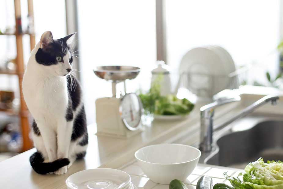 kediyi-tezgahtan-uzak-tutmak