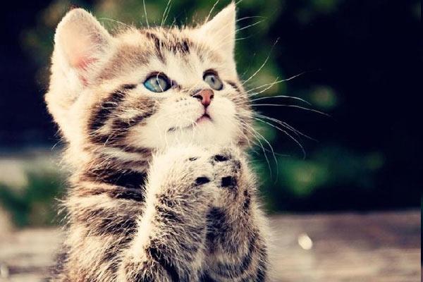kedilerin-yememesi-gereken
