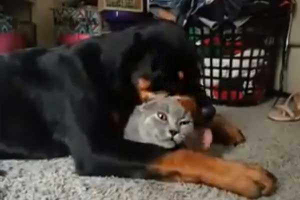 kopek-kediyi-yaliyor