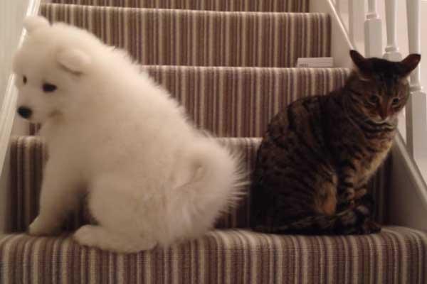 kopek-kediyle-arkadas-olmak-istiyor