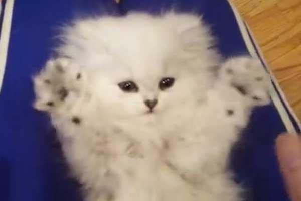 taklitci-yavru-kediyi-yemek-isteyeceksiniz