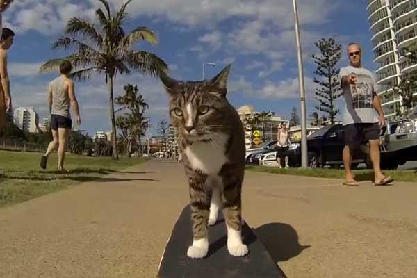 kaykayc-kedi