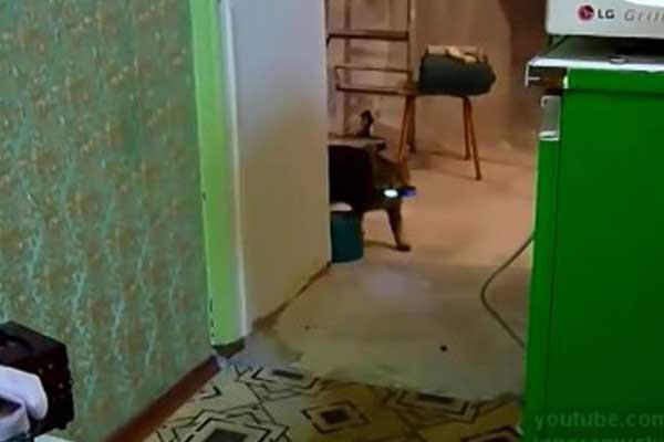 kedi-cep-telefonu