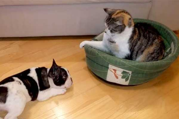 kedi-kopek-yatak-kavgasi