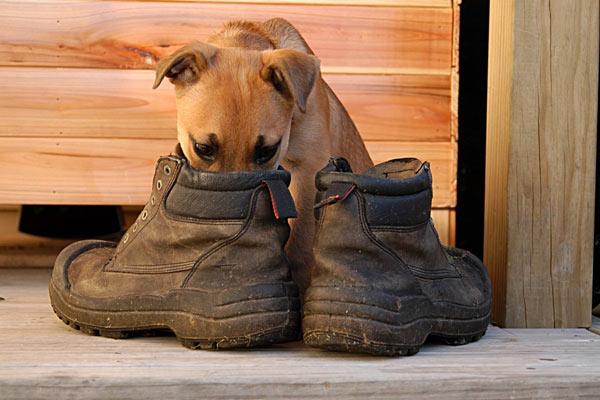 ayakkabi-kokusundan-kurtulma