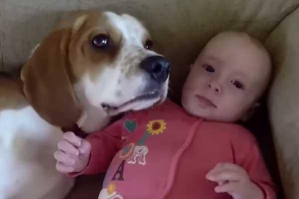 bebekle-kopegin-dostlugu