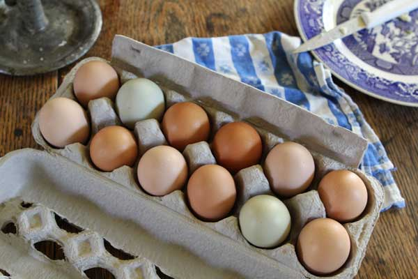 yumurta-taze-kalmasi-icin