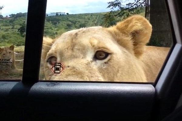 aslan-kapi-acabilir-mi