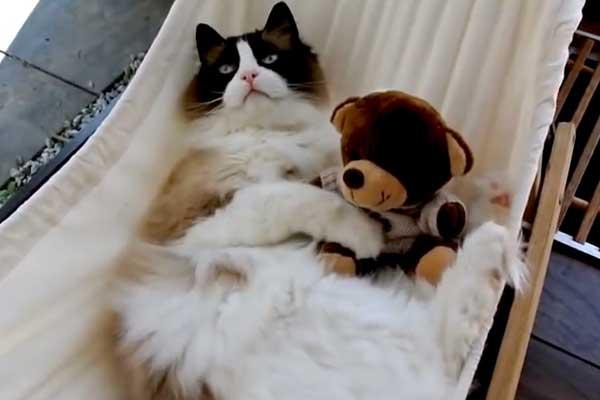 kediler-hamak-keyfi