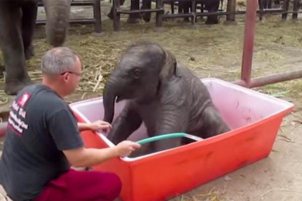 yavru-filin-banyo-keyfi