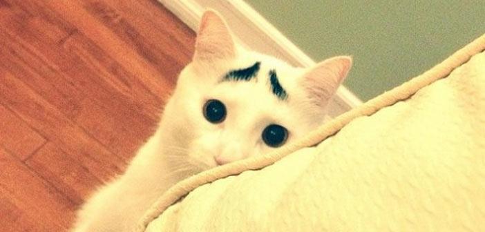 kasli-kedi-sam