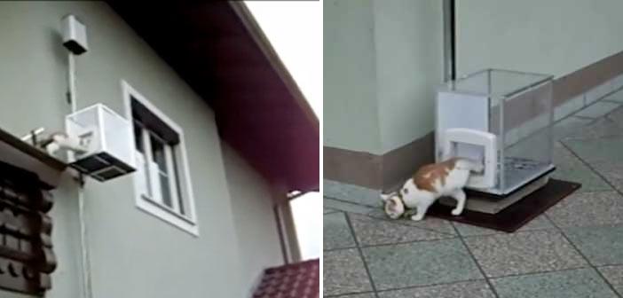 kedi-asansoru