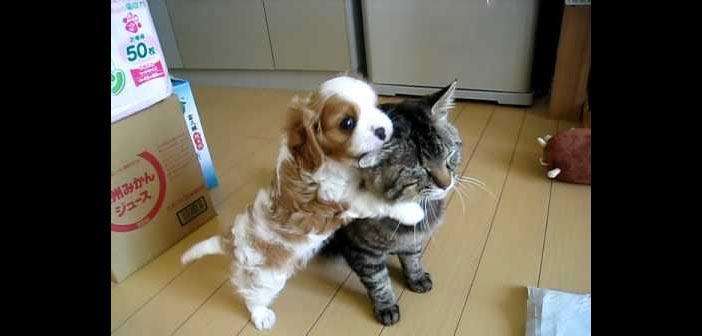 kedi-ile-kopek