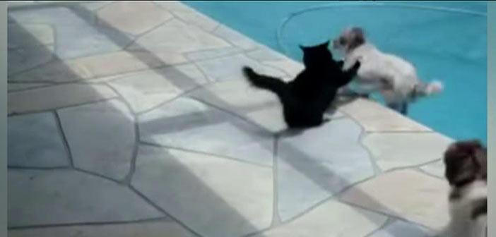 kedi-kopegi-havuza-atiyor