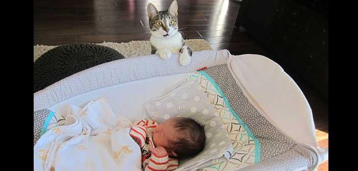 kedilerine-soylemeyi-unutmuslar