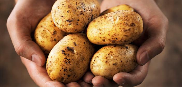 patates-ipuclari