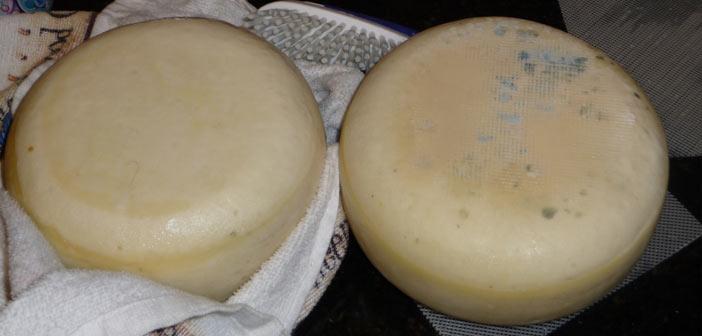 peynir-kuflenme