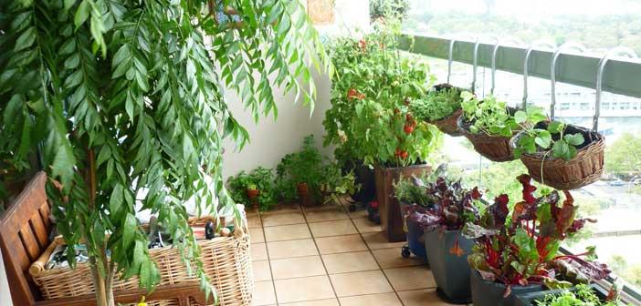 Evde sebze ve meyve yeti tirmek ster misiniz for Terrace garden in india