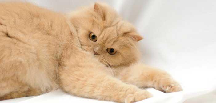 kedi-tuyu-nasil-temizlenir