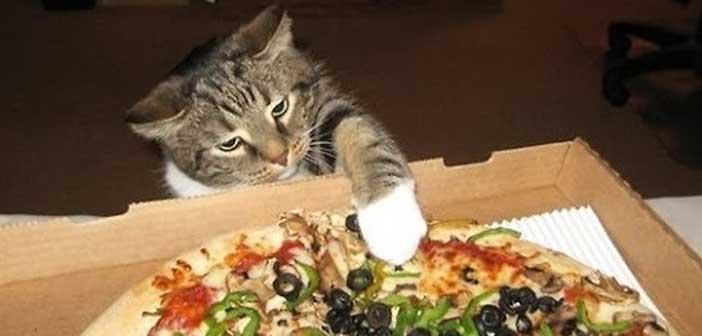 kediler-ve-pizzalar