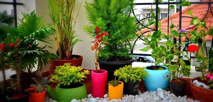 balkonda-bitkiler