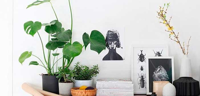 kapali-mekan-bitkileri