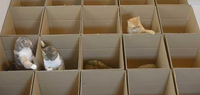 kediler-ve-kutular