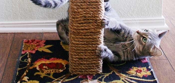 ev-yapimi-kedi-tirmalama