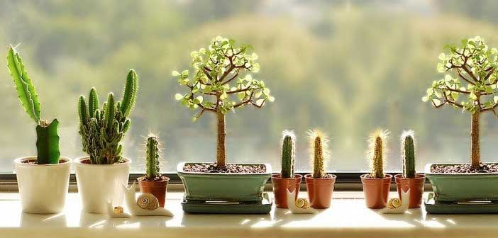 evde-kaktus-bakimi