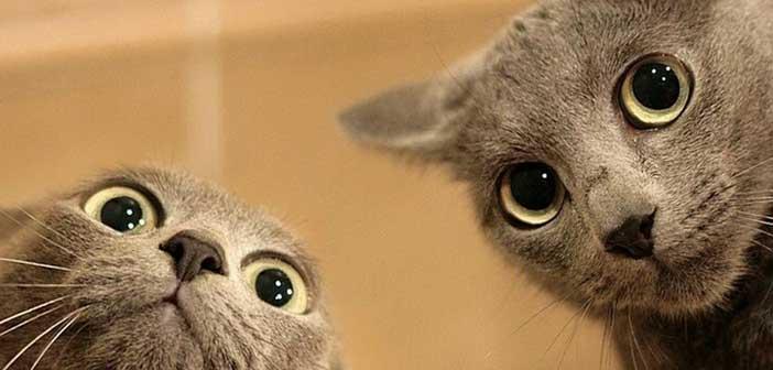 kedi-davranislari
