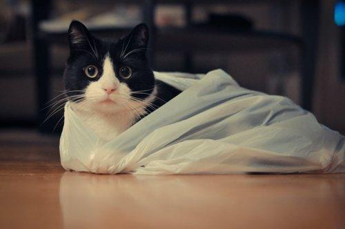 poset-kedi