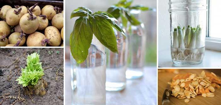 yeniden-buyuyen-bitkiler