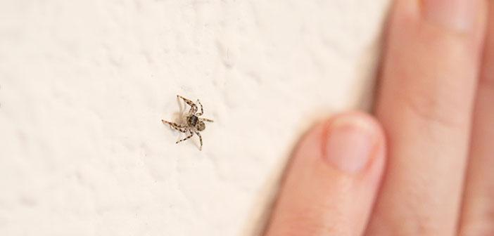 Örümcekleri Evinizden Uzak Tutmanın Doğal Yöntemleri