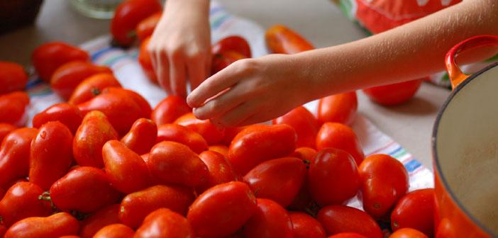 salca-yapimi-domates-secimi
