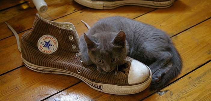 ayakkabilarin-kokmasi-nasil-onlenir