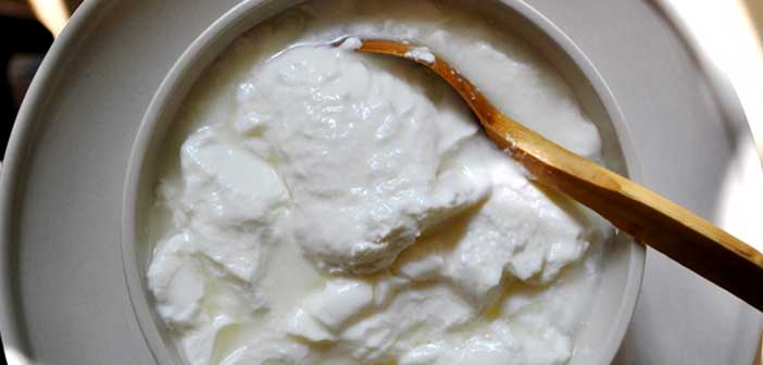 sulanan-yogurt