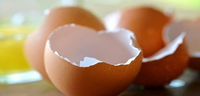 Yumurta Kabukları