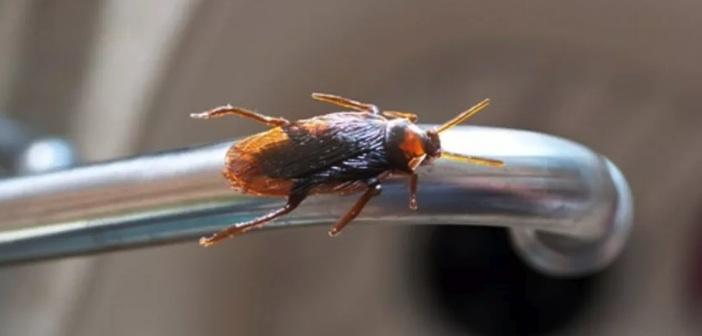Sirke ile Böcekler Nasıl Yok Edilir?